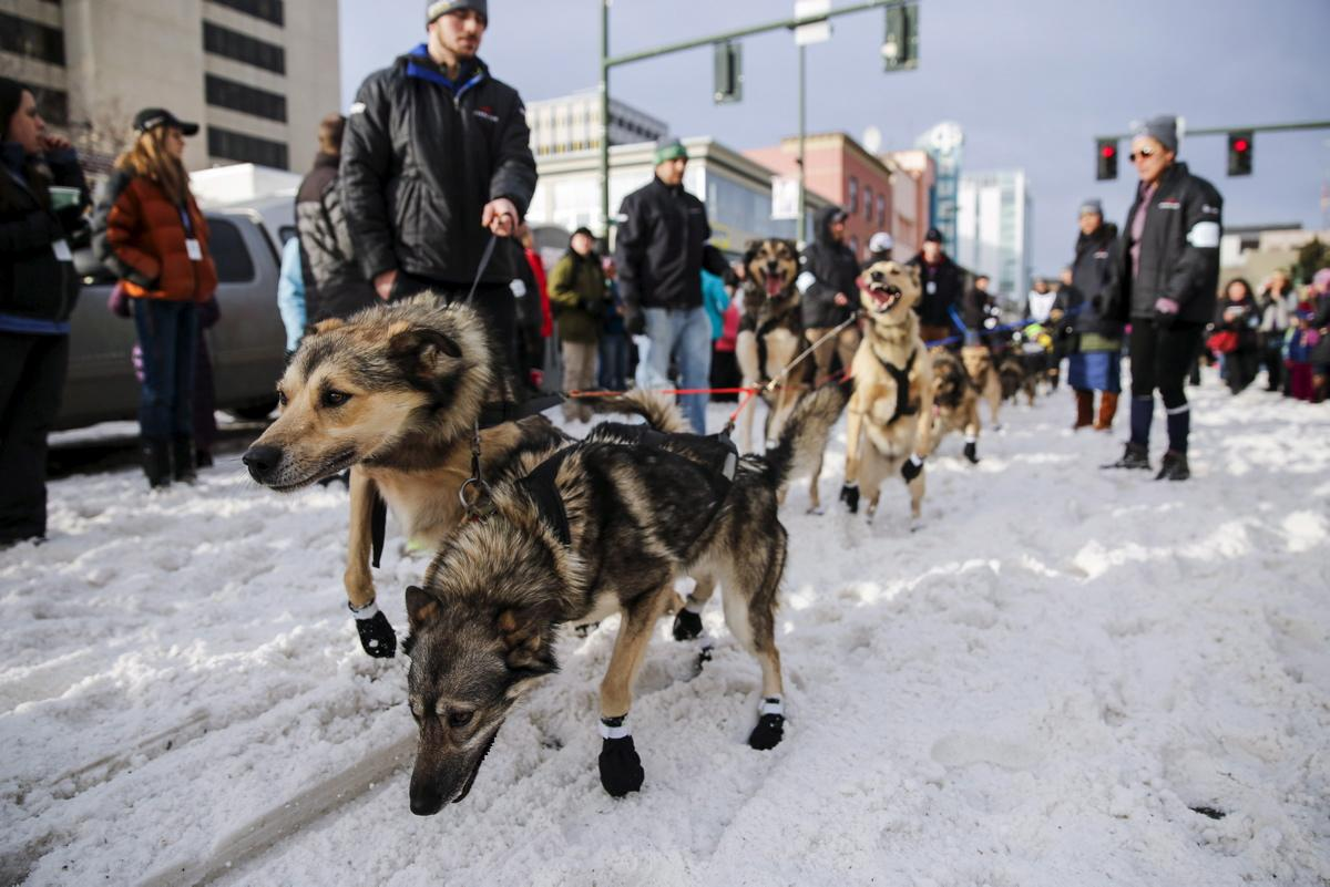 Iditarod Contestants Begin Nearly 1,000 Mile Race Across ...