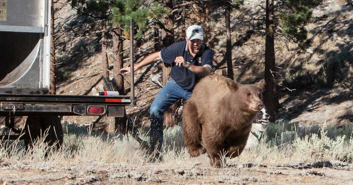 Bear Protection With Frontiersman Bear Spray: Nevada Biologist Sues Bear Protection Activists For